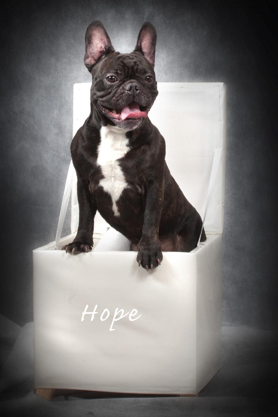 chien-portrait